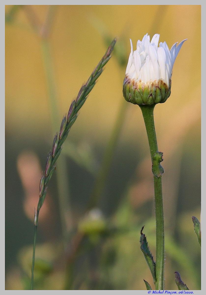 [Fil ouvert] Fleurs et plantes - Page 32 Dsc08235