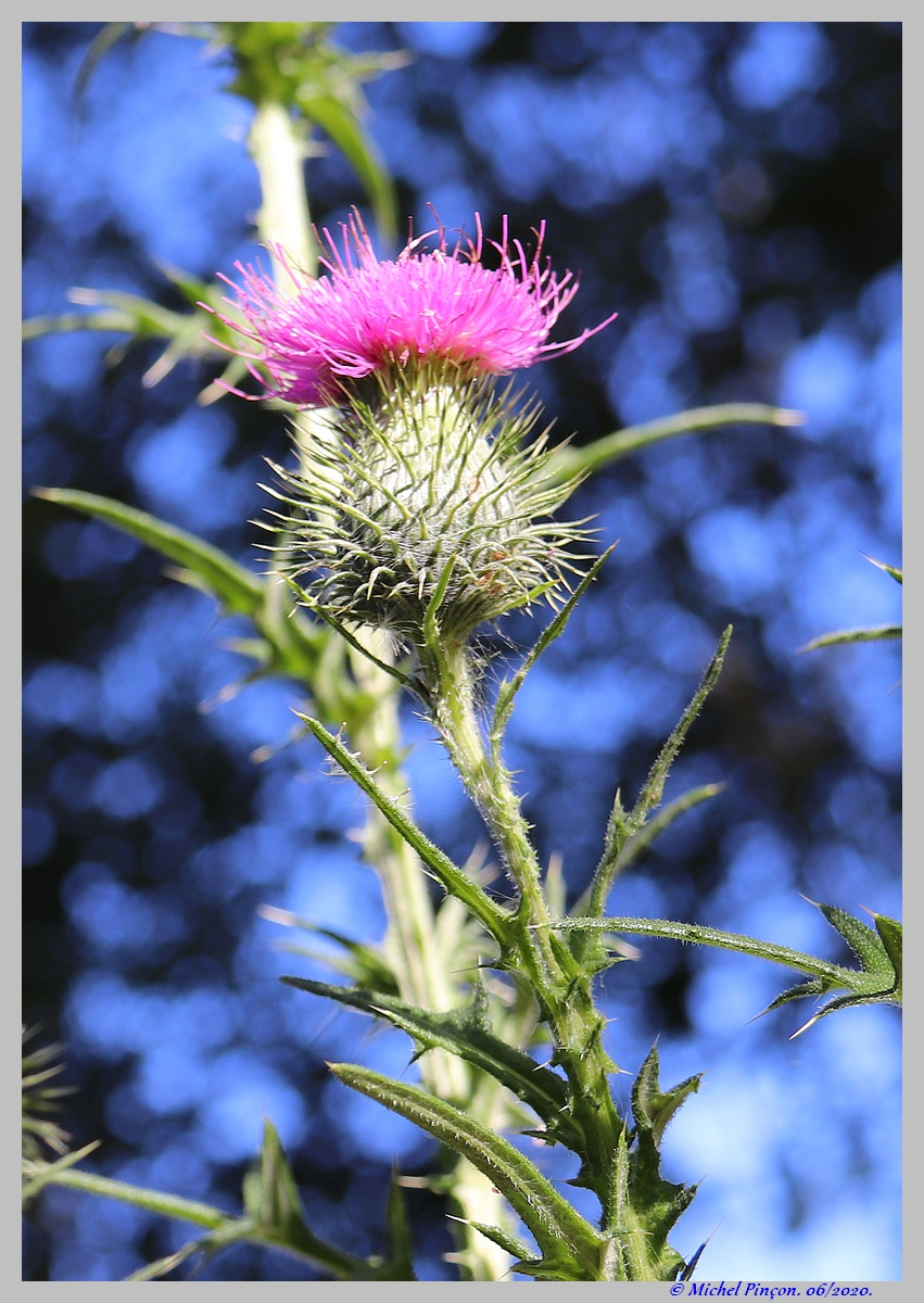 [Fil ouvert] Fleurs et plantes - Page 32 Dsc08236