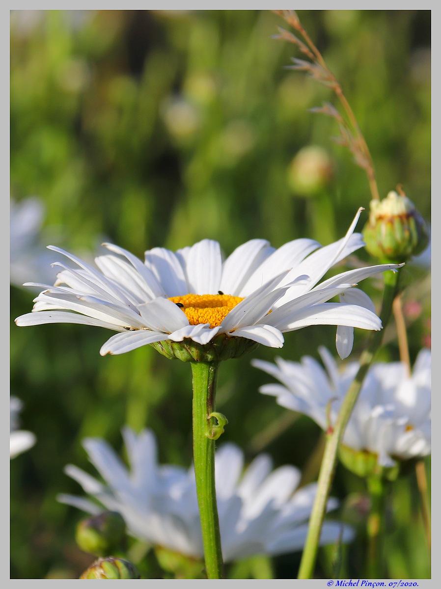[Fil ouvert] Fleurs et plantes - Page 32 Dsc08237