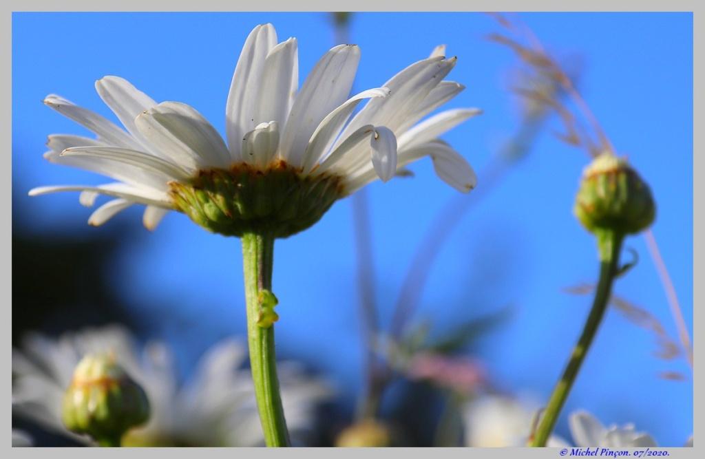 [Fil ouvert] Fleurs et plantes - Page 32 Dsc08239