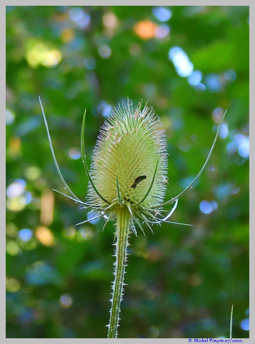 [Fil ouvert] Fleurs et plantes - Page 32 Dsc08241