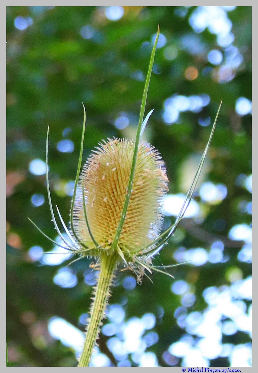 [Fil ouvert] Fleurs et plantes - Page 32 Dsc08242