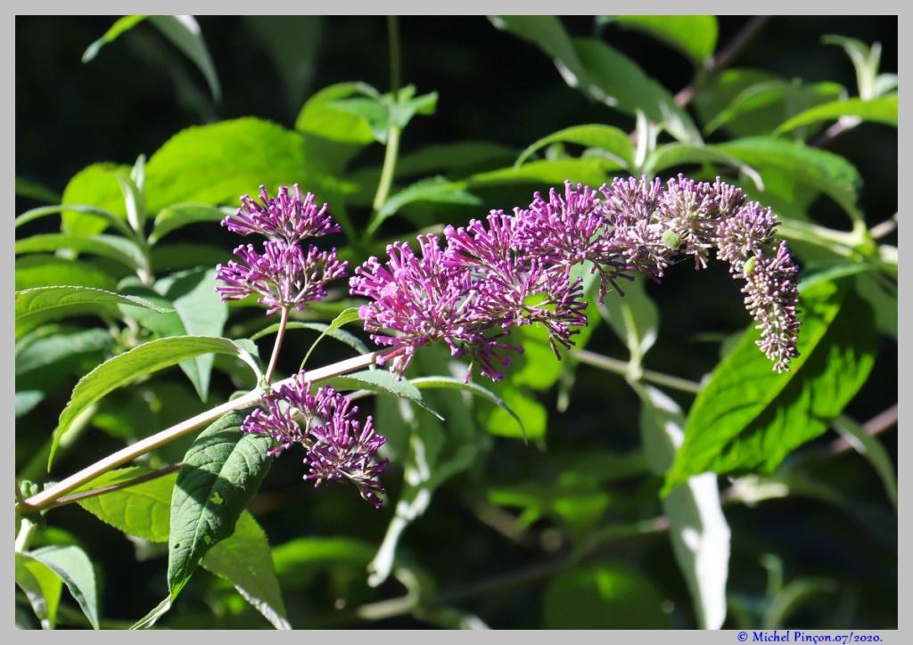 [Fil ouvert] Fleurs et plantes - Page 32 Dsc08243