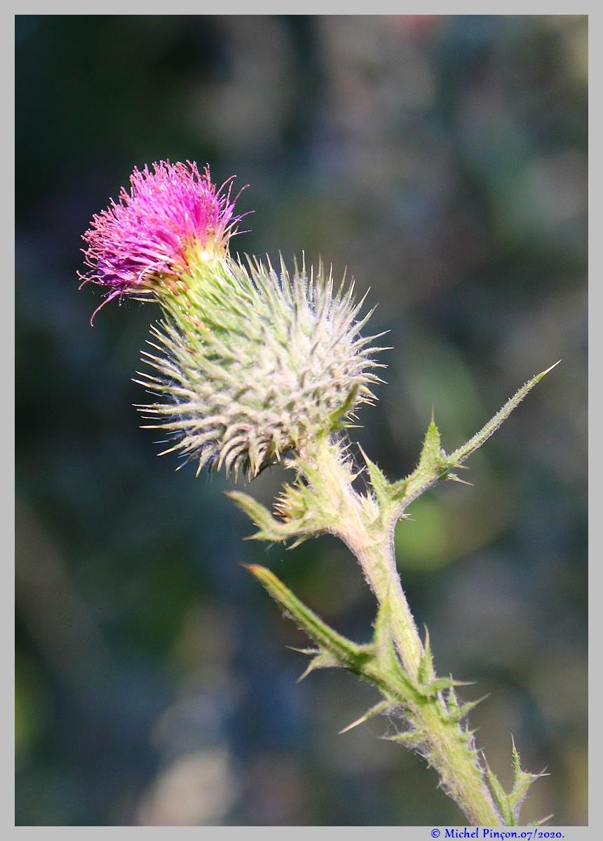 [Fil ouvert] Fleurs et plantes - Page 32 Dsc08333