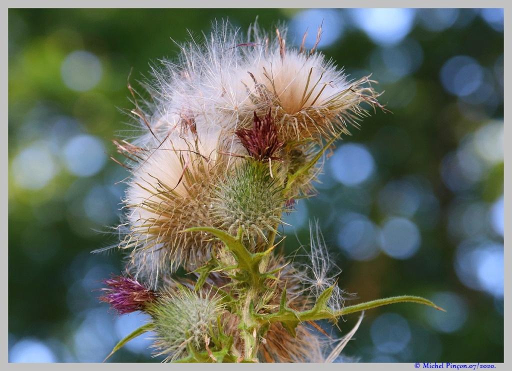 [Fil ouvert] Fleurs et plantes - Page 32 Dsc08335