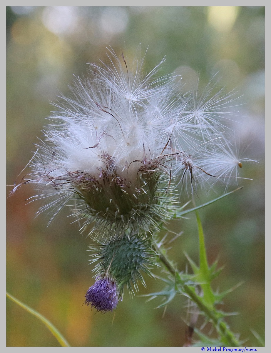 [Fil ouvert] Fleurs et plantes - Page 32 Dsc08336