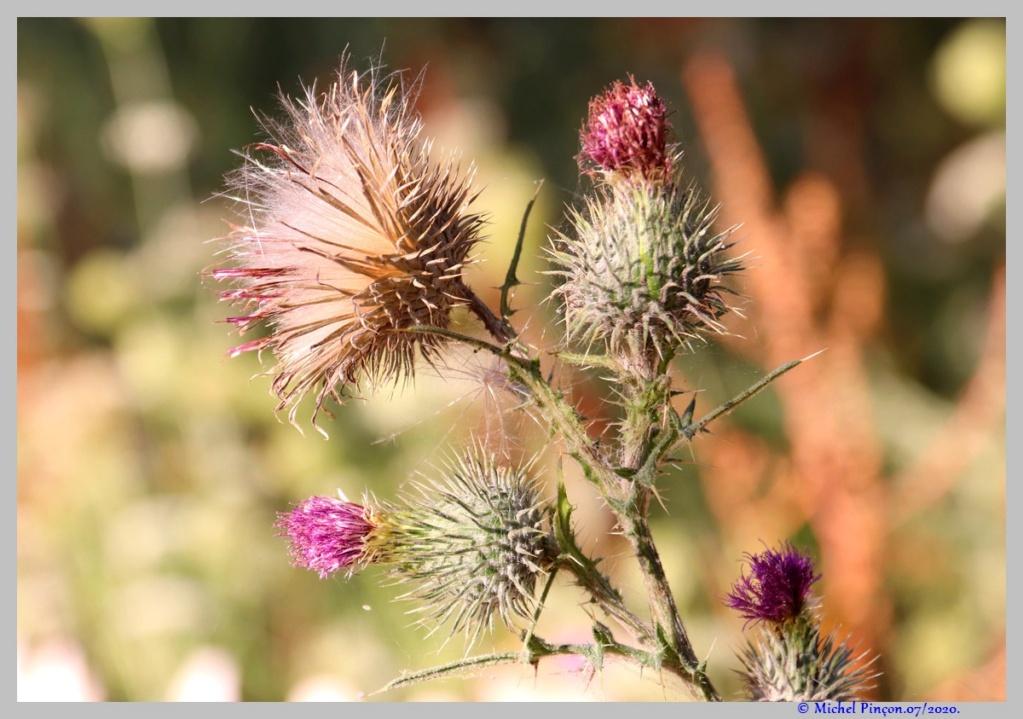 [Fil ouvert] Fleurs et plantes - Page 32 Dsc08337