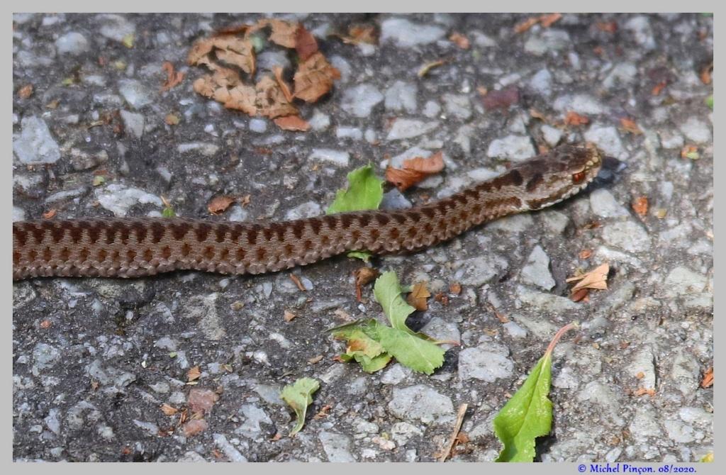 [Fil ouvert à tous] Reptiles, serpents, tortues, amphibiens, ... - Page 12 Dsc08551