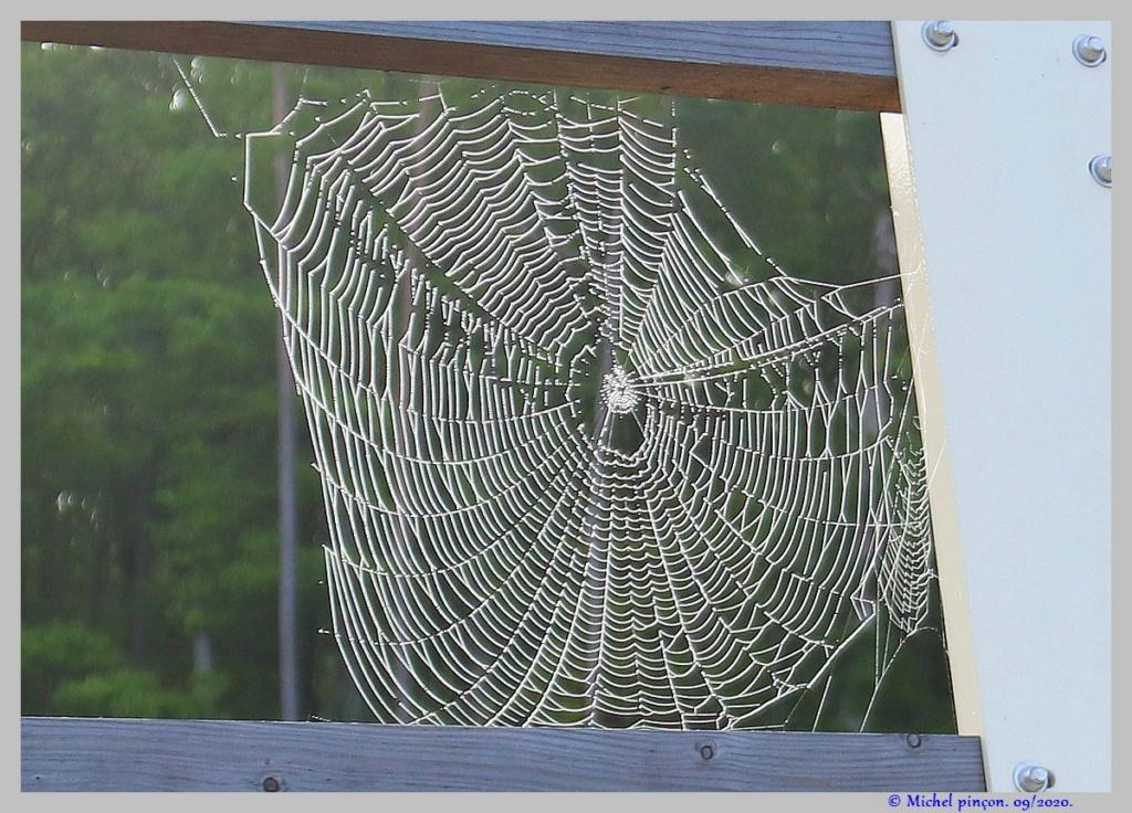[Fil ouvert] Toile d'araignée - Page 2 Dsc08656