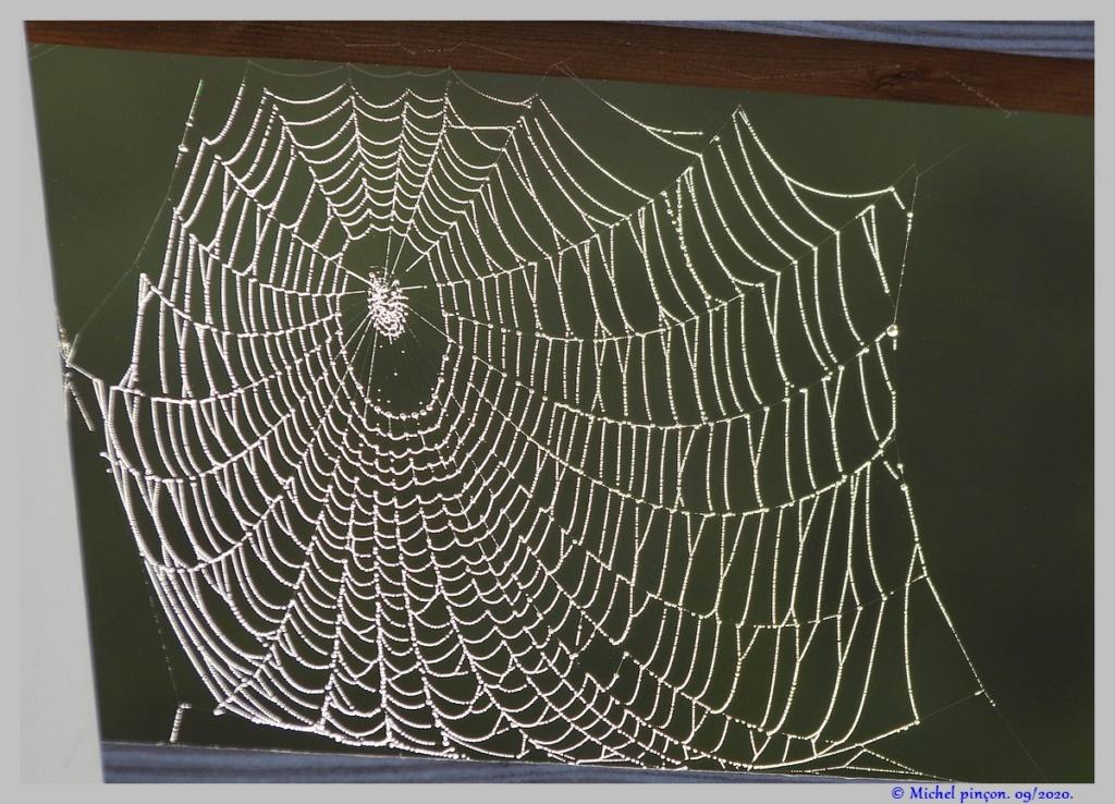 [Fil ouvert] Toile d'araignée - Page 2 Dsc08658