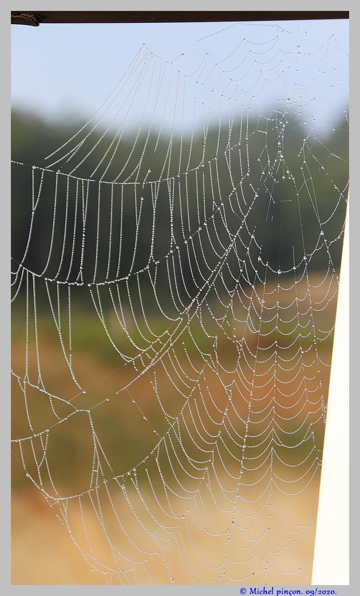 [Fil ouvert] Toile d'araignée - Page 2 Dsc08659