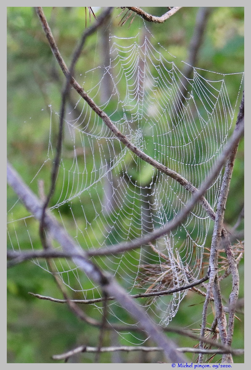 [Fil ouvert] Toile d'araignée - Page 2 Dsc08660