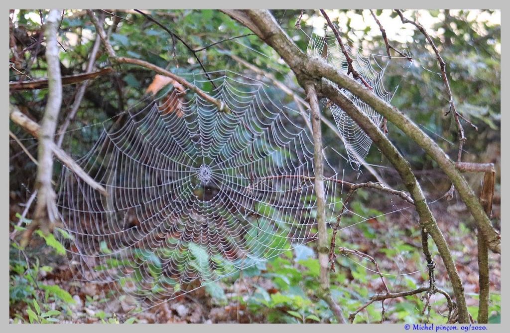 [Fil ouvert] Toile d'araignée - Page 2 Dsc08661