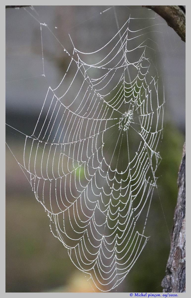 [Fil ouvert] Toile d'araignée - Page 2 Dsc08662