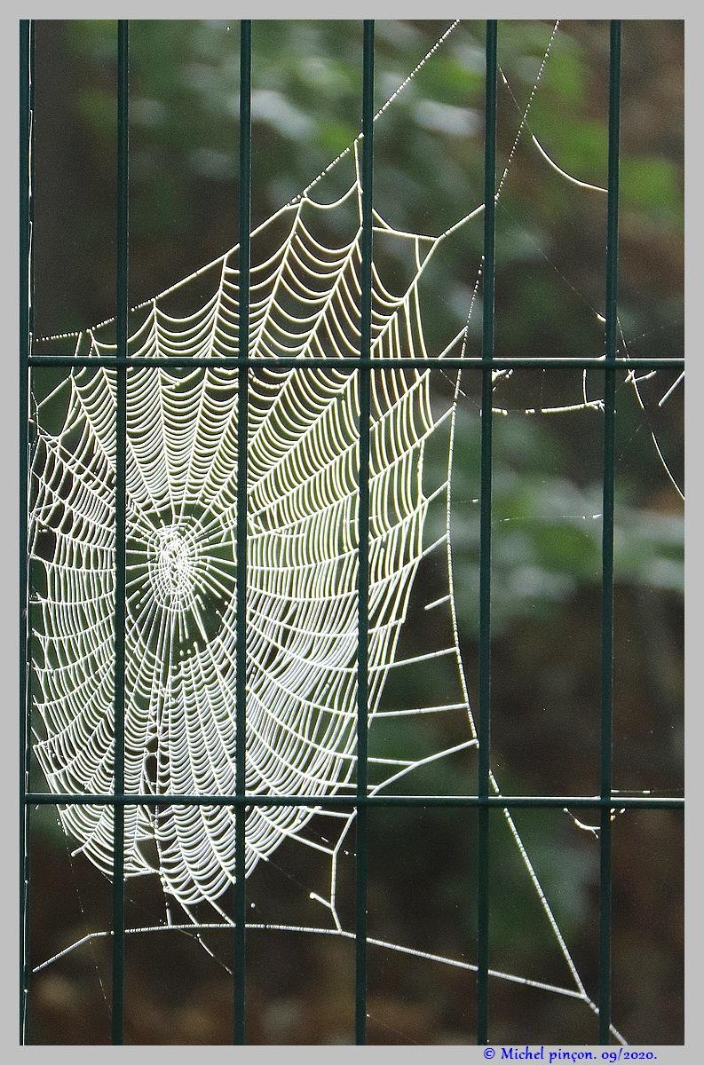 [Fil ouvert] Toile d'araignée - Page 2 Dsc08663