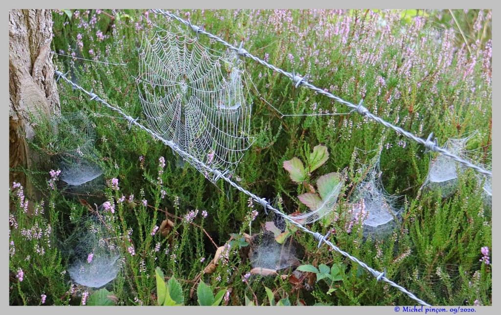 [Fil ouvert] Toile d'araignée - Page 2 Dsc08664
