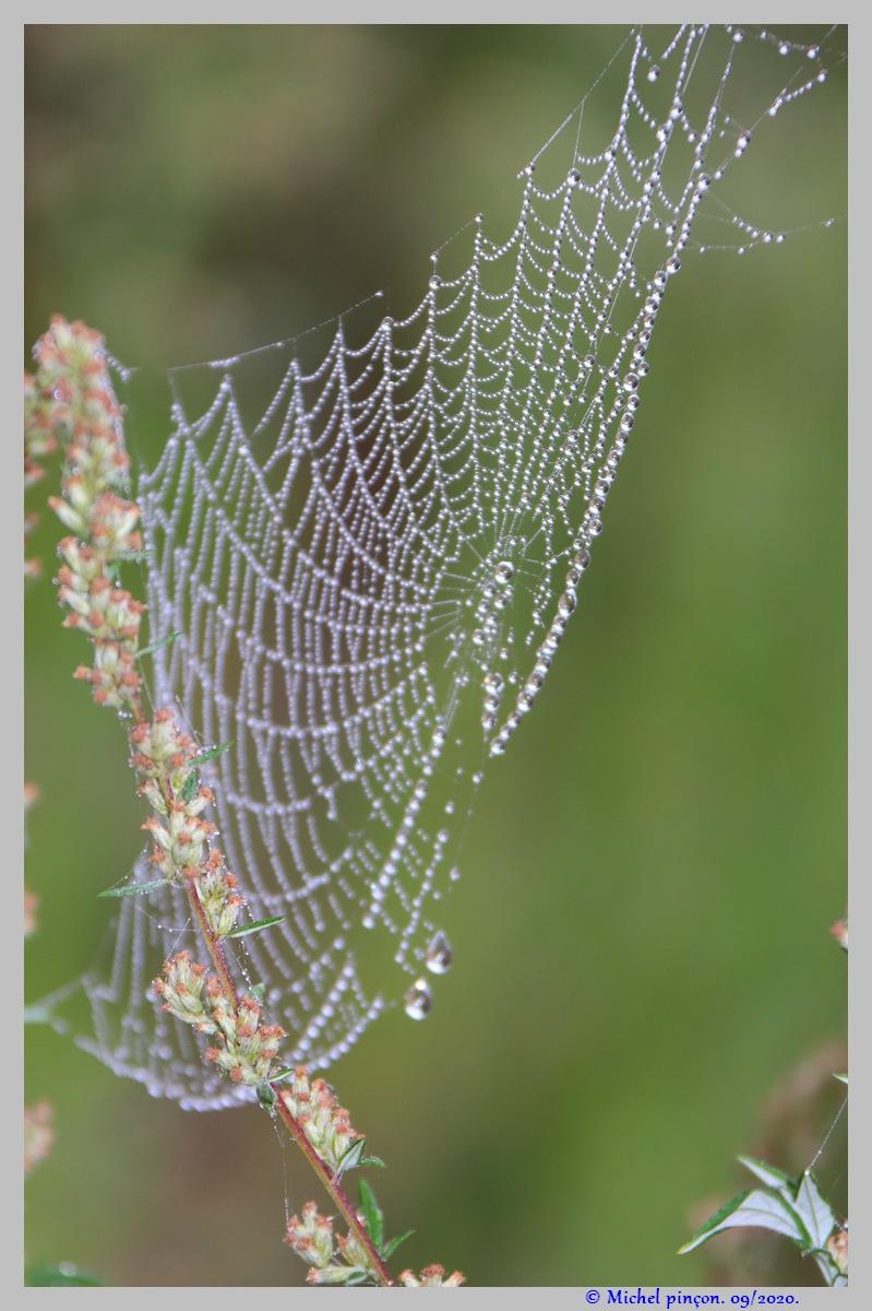 [Fil ouvert] Toile d'araignée - Page 2 Dsc08665