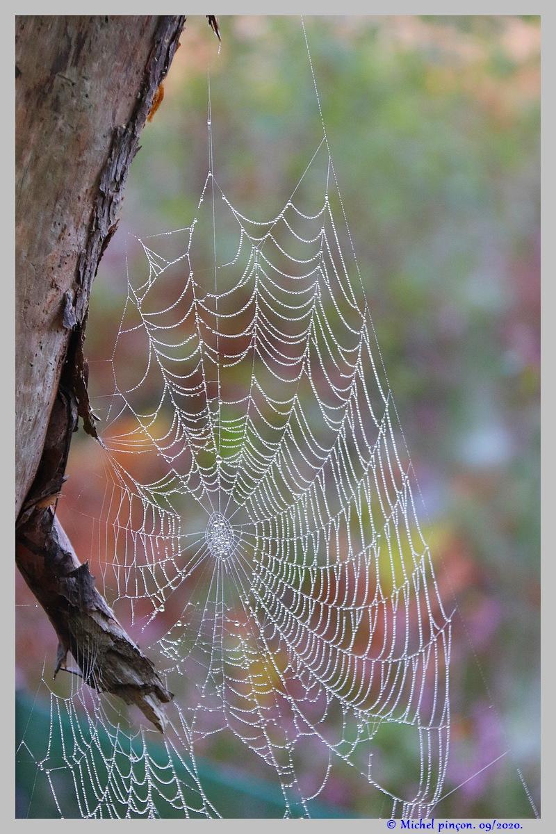 [Fil ouvert] Toile d'araignée - Page 2 Dsc08666