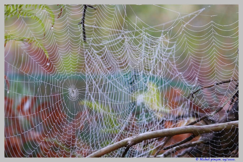 [Fil ouvert] Toile d'araignée - Page 2 Dsc08667