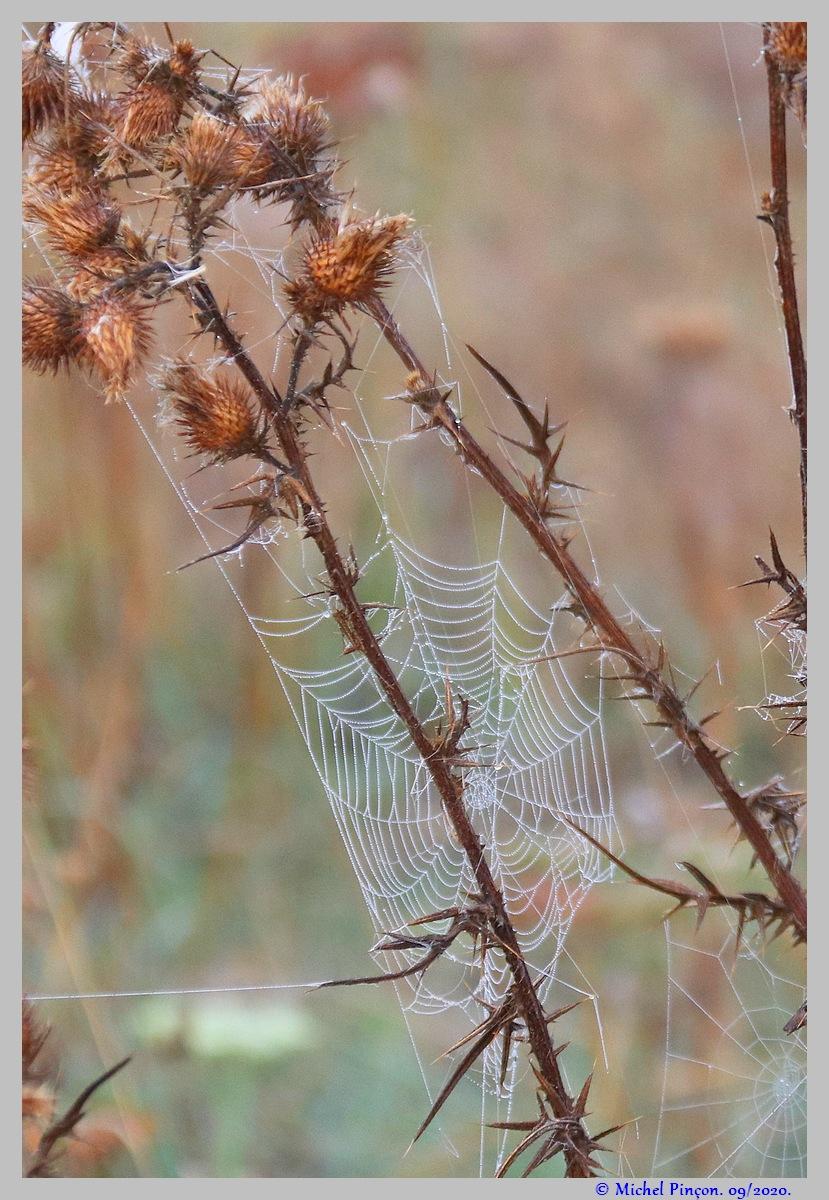 [Fil ouvert] Toile d'araignée - Page 2 Dsc08695