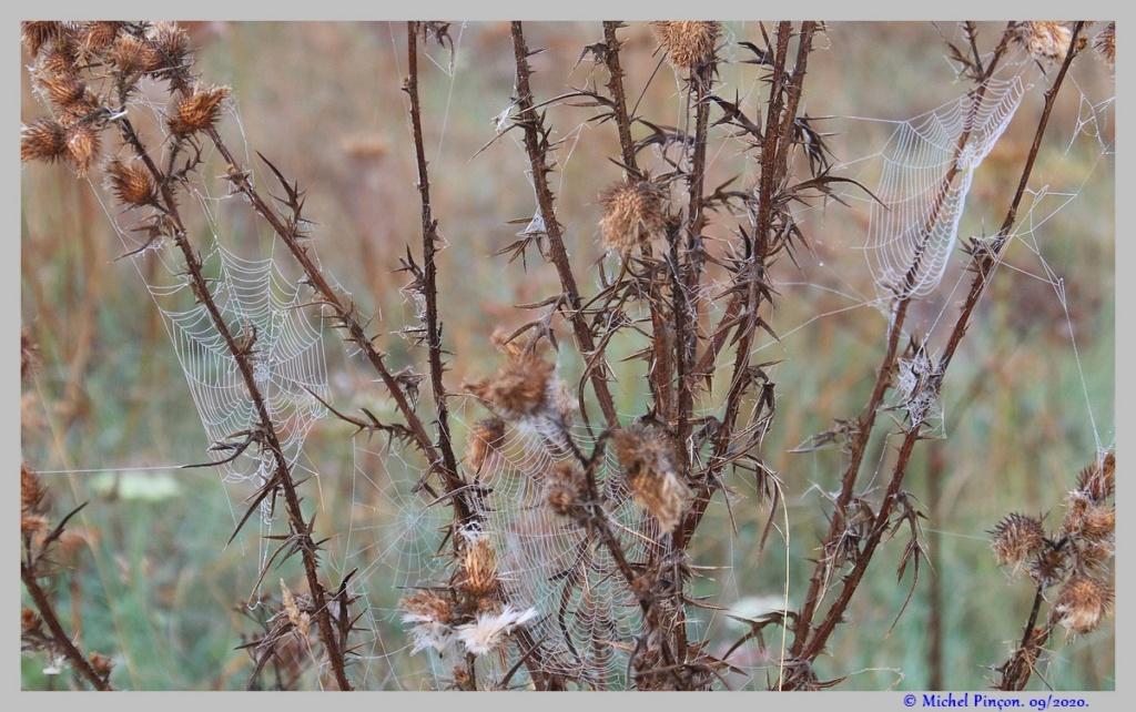 [Fil ouvert] Toile d'araignée - Page 2 Dsc08697
