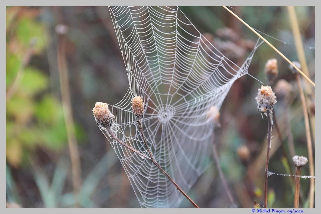 [Fil ouvert] Toile d'araignée - Page 2 Dsc08698