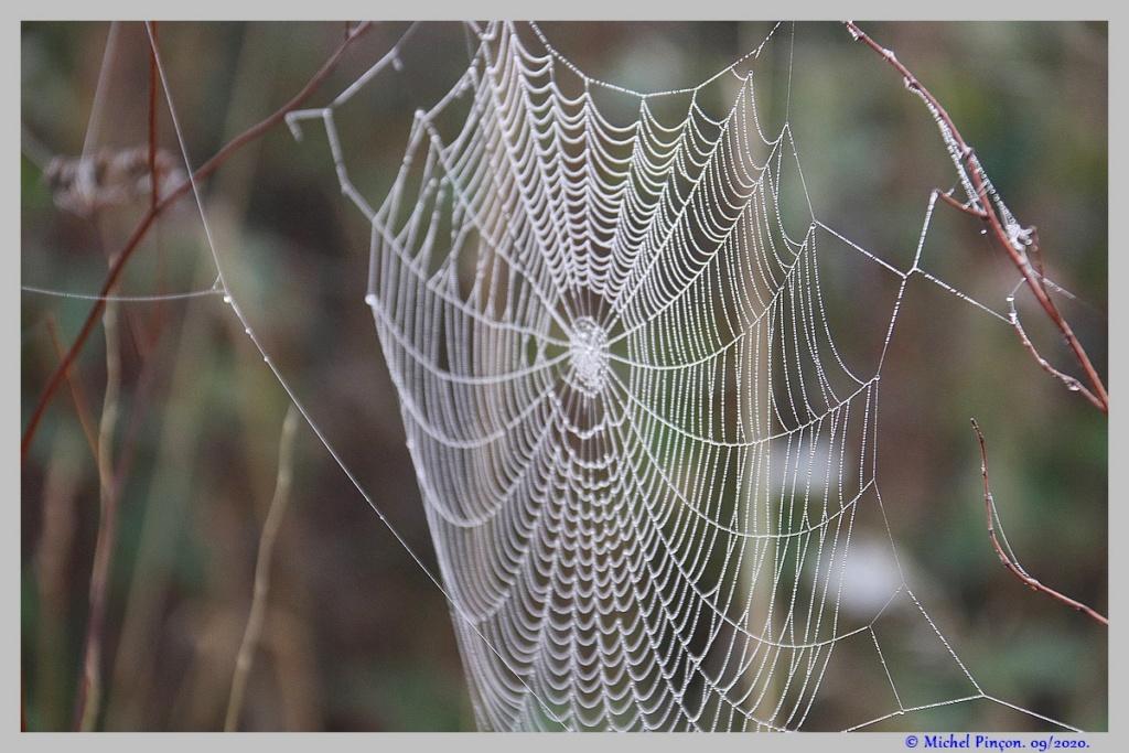 [Fil ouvert] Toile d'araignée - Page 2 Dsc08699