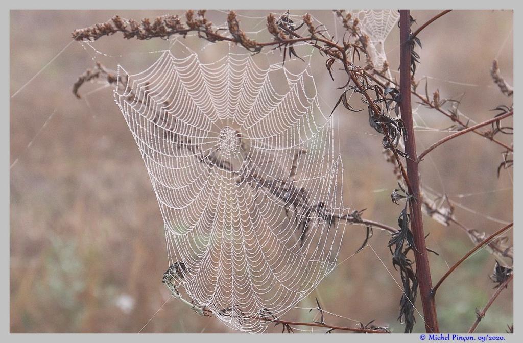 [Fil ouvert] Toile d'araignée - Page 2 Dsc08700