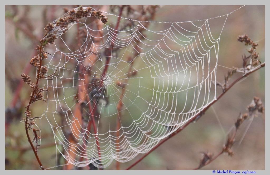 [Fil ouvert] Toile d'araignée - Page 2 Dsc08702