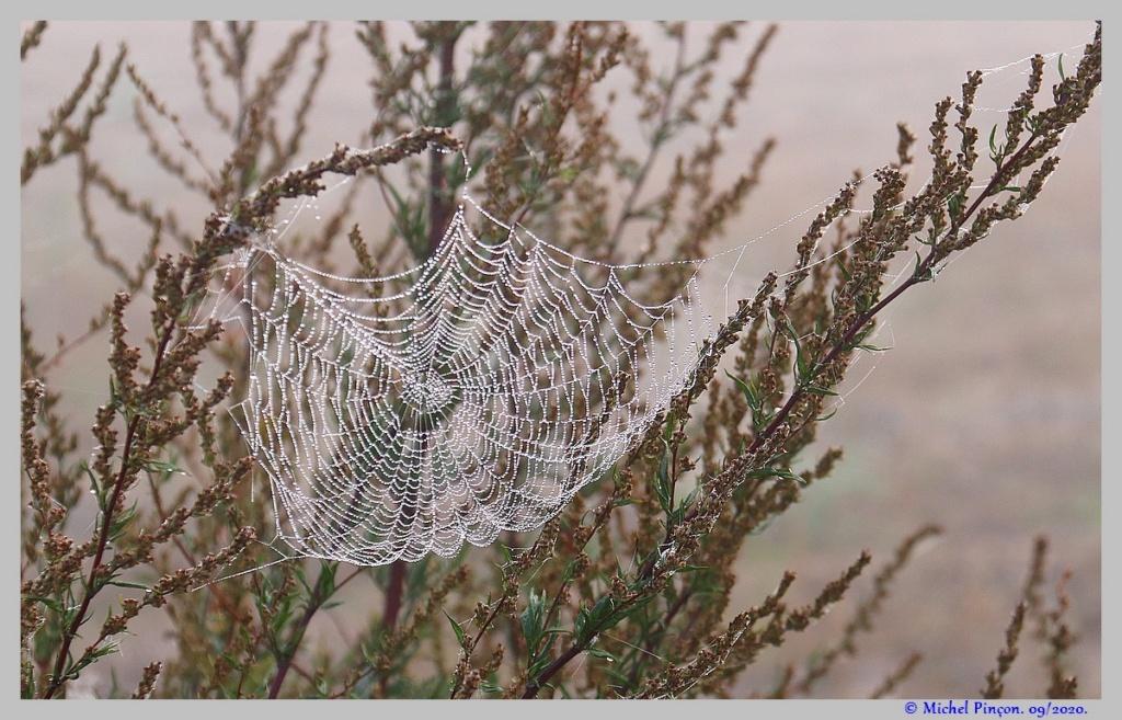 [Fil ouvert] Toile d'araignée - Page 2 Dsc08704
