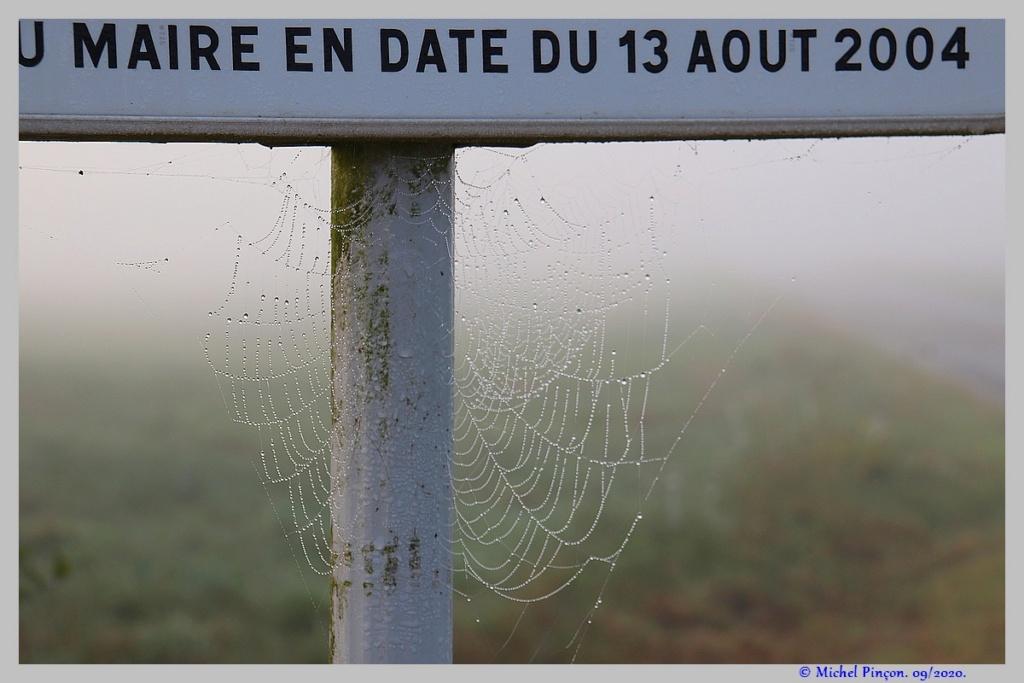 [Fil ouvert] Toile d'araignée - Page 2 Dsc08705