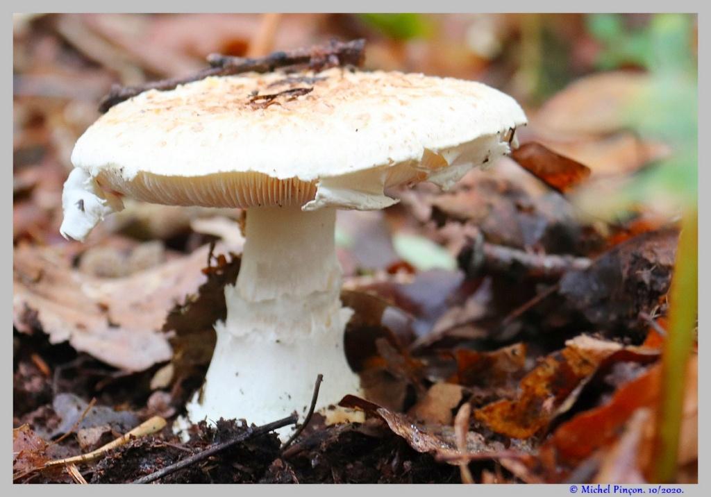 [fil ouvert] les champignons - Page 18 Dsc09004