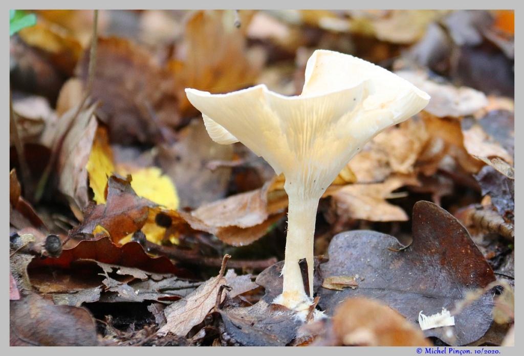 [fil ouvert] les champignons - Page 18 Dsc09026