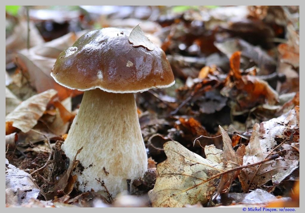 [fil ouvert] les champignons - Page 18 Dsc09094