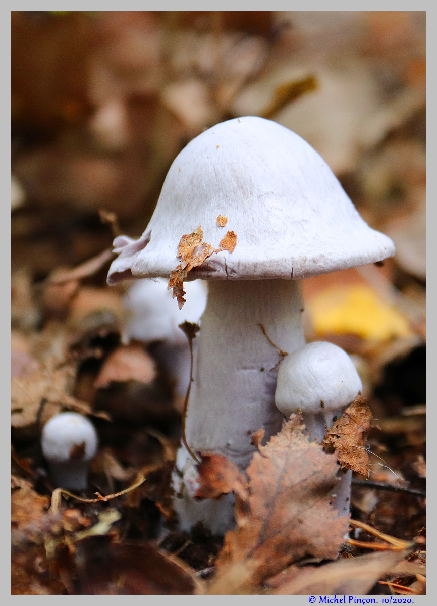 [fil ouvert] les champignons - Page 18 Dsc09095