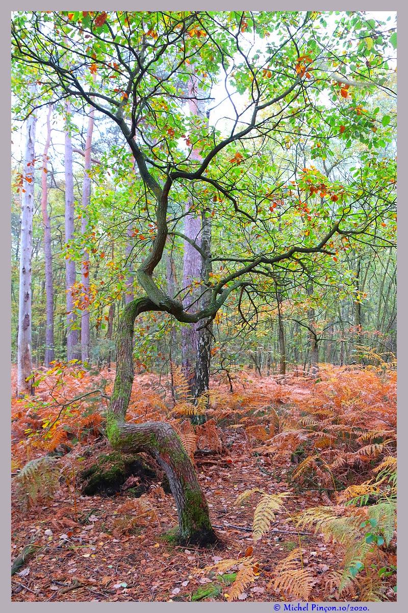 [fil ouvert] la forêt dans tous ses états - Page 28 Dsc09104