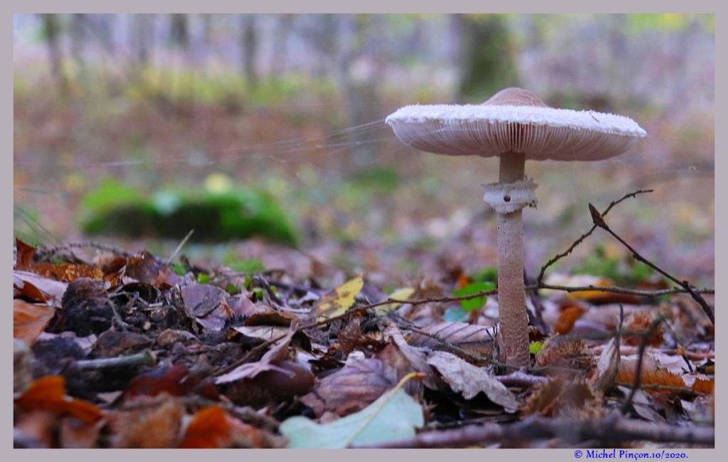 [fil ouvert] les champignons - Page 18 Dsc09108