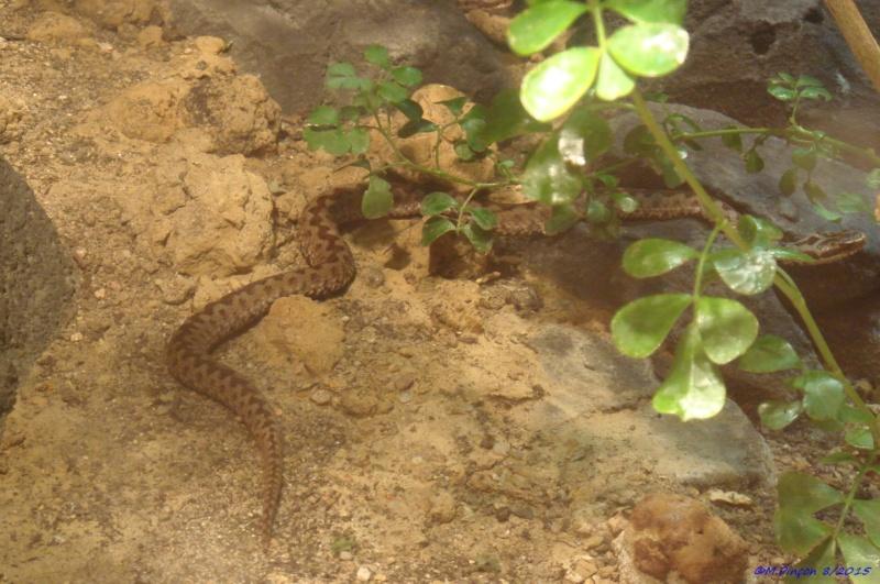 [Fil ouvert à tous] Reptiles, serpents, tortues, amphibiens, ... - Page 2 Dsc09110