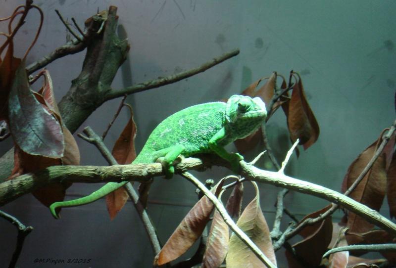 [Fil ouvert à tous] Reptiles, serpents, tortues, amphibiens, ... - Page 2 Dsc09112