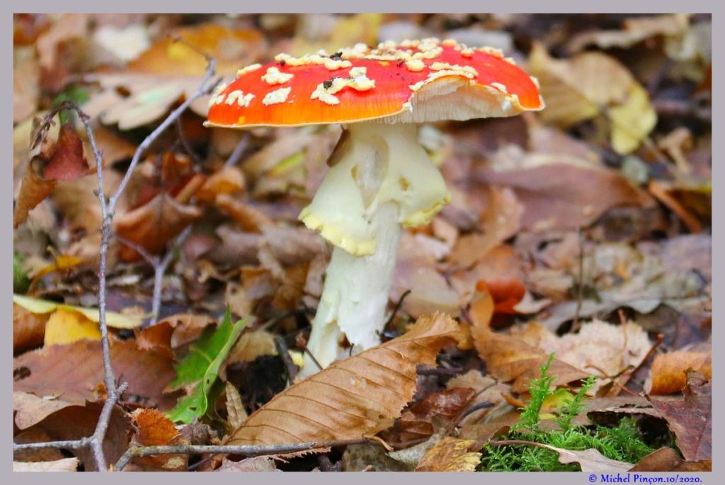 [fil ouvert] les champignons - Page 18 Dsc09123