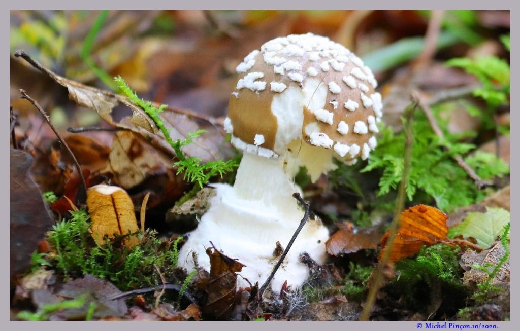[fil ouvert] les champignons - Page 19 Dsc09129