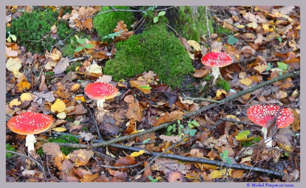[fil ouvert] les champignons - Page 19 Dsc09163