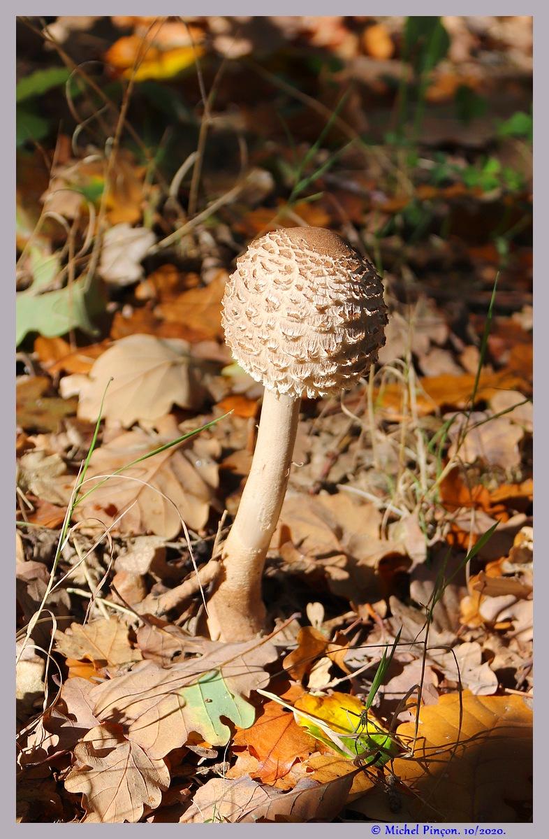 [fil ouvert] les champignons - Page 19 Dsc09164