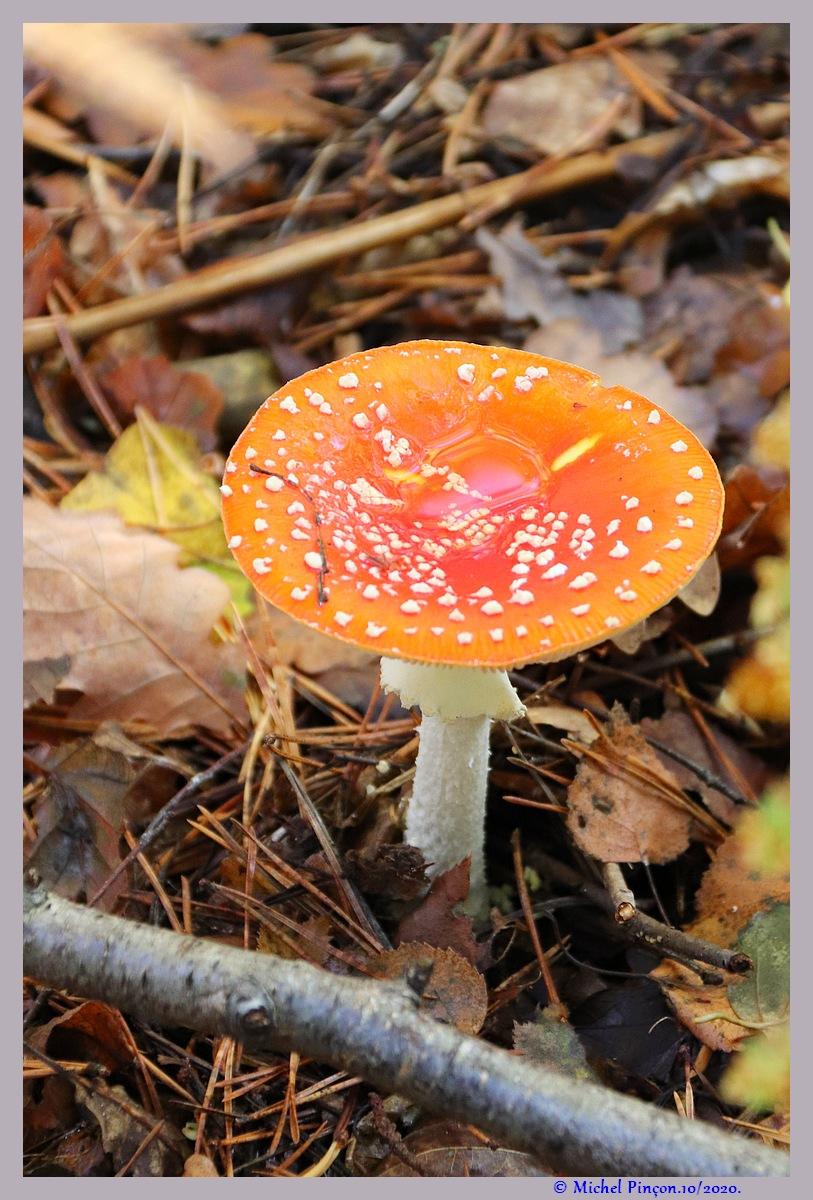 [fil ouvert] les champignons - Page 19 Dsc09166