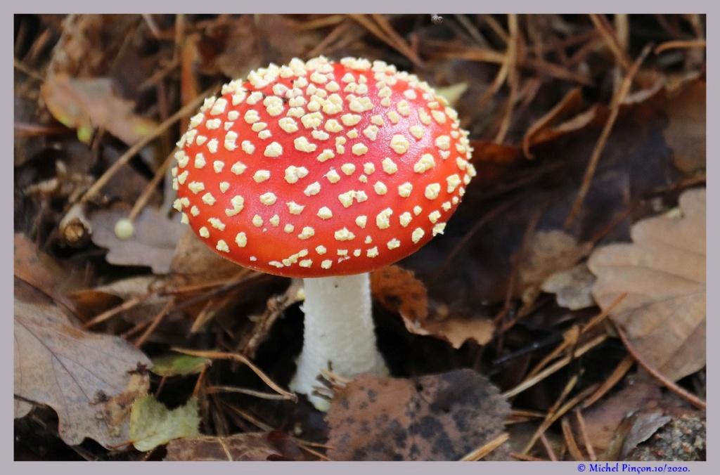 [fil ouvert] les champignons - Page 19 Dsc09167