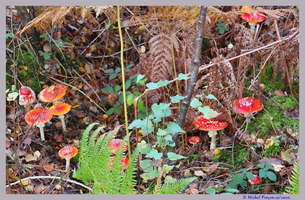 [fil ouvert] les champignons - Page 19 Dsc09171