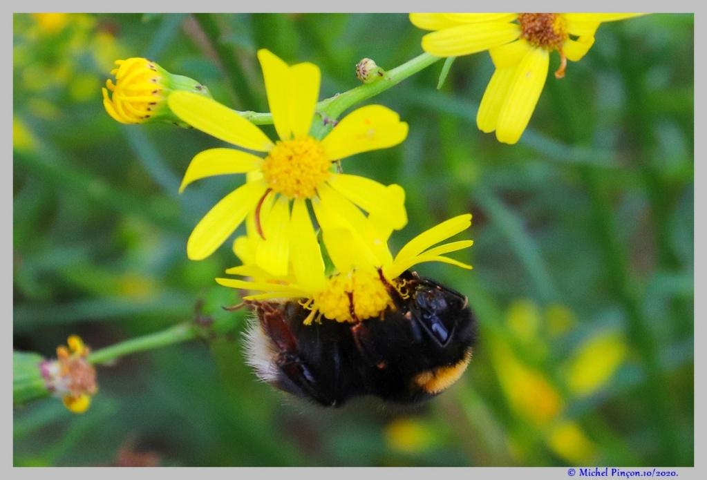 Insectes et Proxi. [Fil Ouvert] - Page 19 Dsc09205