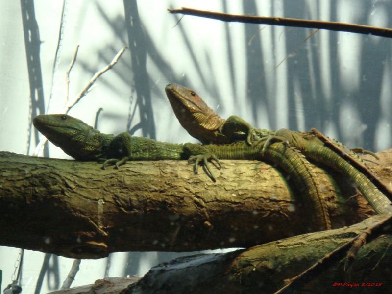 [Fil ouvert à tous] Reptiles, serpents, tortues, amphibiens, ... - Page 2 Dsc09210