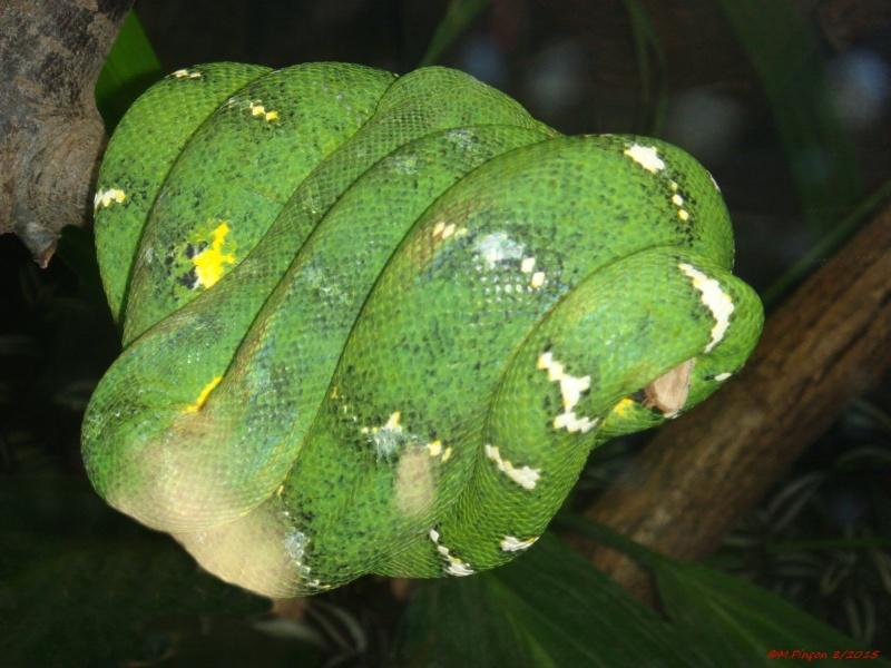 [Fil ouvert à tous] Reptiles, serpents, tortues, amphibiens, ... - Page 2 Dsc09211