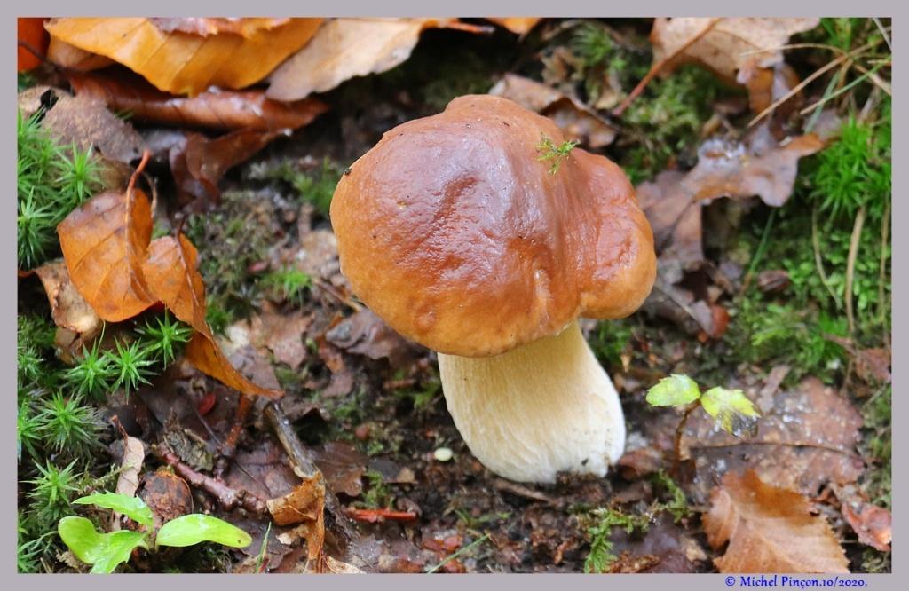 [fil ouvert] les champignons - Page 19 Dsc09270